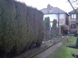 Conifer Hedge Removal - Before