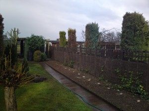Hedge, Bloxwich - After