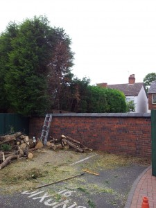 Conifer, Cannock - After