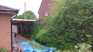 Hedge Reduction - Before